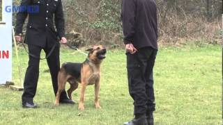 New Police Dogs Complete Their Training
