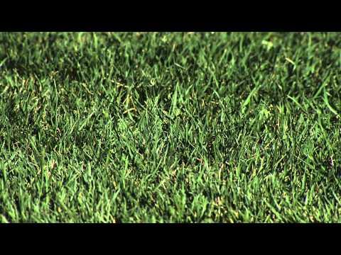 Cool Season Turfgrass Mixes