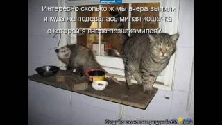 """Копия видео """"коты фото приколы. Смешно до слёз"""""""