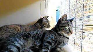 家に居ついた野良猫親子。母さん猫・息子猫黒ちび・娘猫茶ちび。8月9...