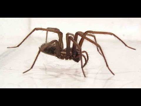 Hoe kom ik van spinnen af