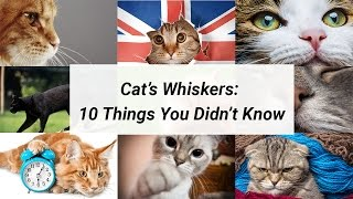 Cat Whiskers - 10 Things You Didn