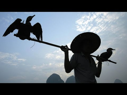 China's Cormorant Fishermen