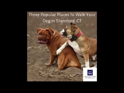 3 Popular Places to Walk Your Dog in Stamford CT | Stamford Dog Bite Lawyers