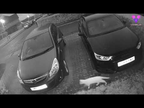 Filman al fantasma de un gato persiguiendo a su amigo felino