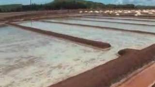 history tomorrow salt making