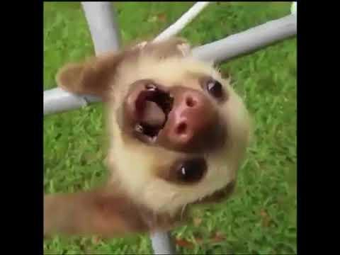 [Z Channel] | Funny Videos | ÔI MẤY CON PÉT!!!