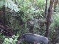 NZ Pig Dog Training School with Joshua Kauta