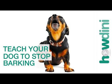 The Keys to Training Your Dog to Stop Barking