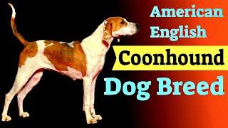 American English Coonhound Dog Breed  Dog Breeds 101