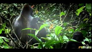Kingdom Of The Apes S01E01 Clash Of Kings