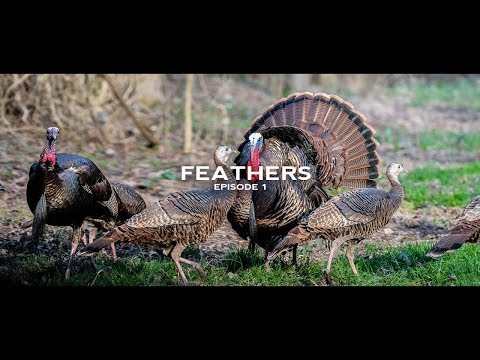 Turkey Hunting- Tennessee Gobblers