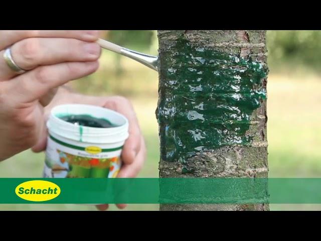 Schacht Gartenpflege: Obstbaum-Schutz vor Frostspanner: Raupenleim auftragen