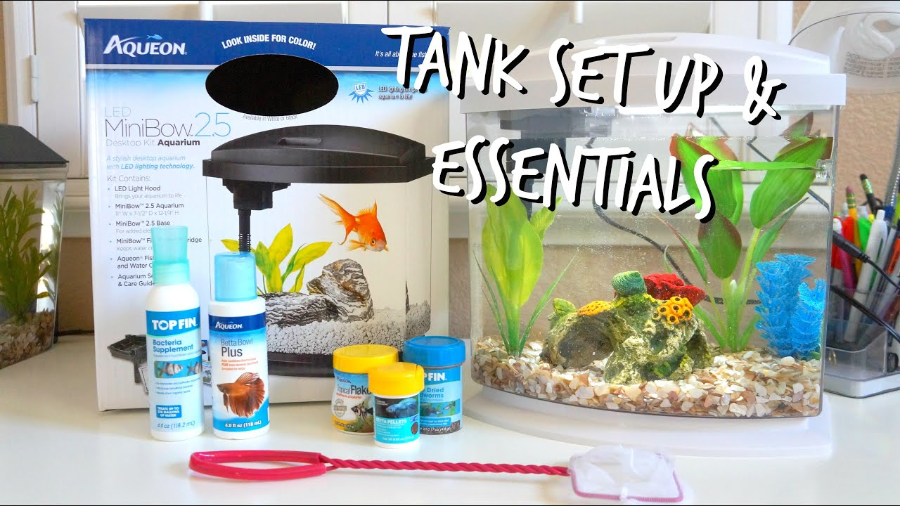 How to set up a betta fish tank essentials youtube for How to care for a betta fish