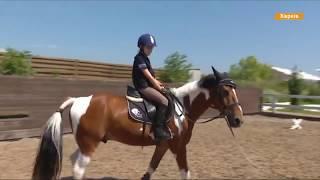 Где в Украине покататься на лошадях и сколько это стоит