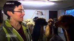 Selbstgesponnene Alpaka-Wolle