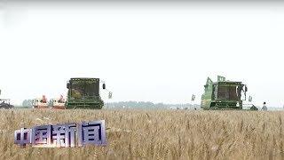 [中国新闻] 农业农村部:中国粮食库存充足 无需抢购囤积 | 新冠肺炎疫情报道