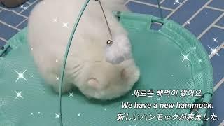 #고양_소소한일상 #고양이해먹 #고양이휴식 #Cat_S…