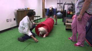 Canine Physical Therapy - Virginia Tech