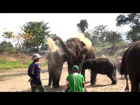 Elephant Freedom Single Day visit
