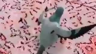 الله  يازينه ههههههه