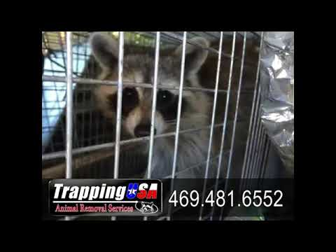 opossum-removal-company-little-elm-tx-469-481-6552