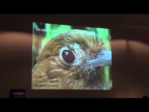 Colombia An infinite source of new bird species