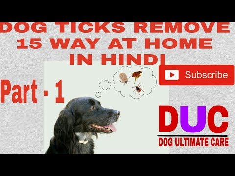 Dog ticks removing 15 way at home ! Part -1 ! In Hindi ! Dog Ultimate Care
