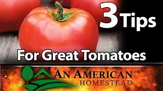 3 Fantastic Tips For Growing Great Tomatoes!