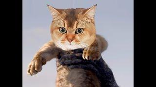 Góc của Bư - Funny cats | Parkmeo Oggy