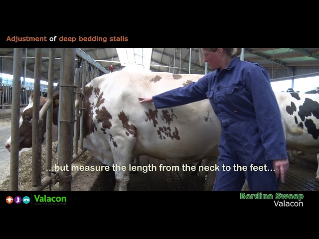 Adjustment of deep bedding stalls for dairy cows