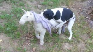 Dog having sex with a Unicorn - This is Love! Unicorn Love!