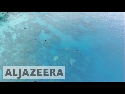 Environmentalists fear damage to Great Barrier Reef amid coal mine talks
