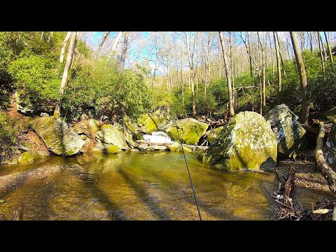 UNEXPECTED Wild Brown Trout Fishing Spot