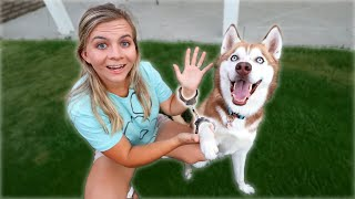 HANDCUFFED TO MY DOG FOR 24 HOURS!