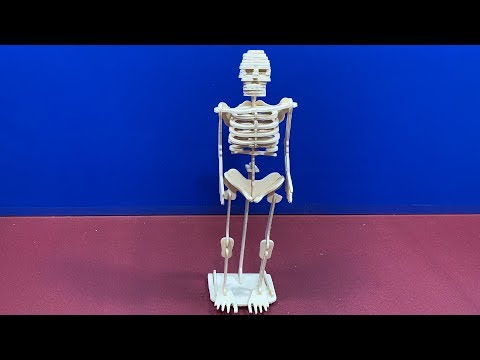 Sea-Land DIY 3D Woodcraft Construction Kit Human Skeleton