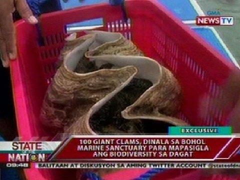 SONA: 100 giant clams, dinala sa Bohol Marine Sanctuary para mapasigla ang biodiversity sa dagat