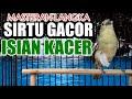 Cocok Untuk Masteran Cipoh Sirtu Gacor Isian Kacer  Mp3 - Mp4 Download