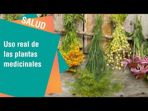 El uso real de las plantas medicinales | Salud