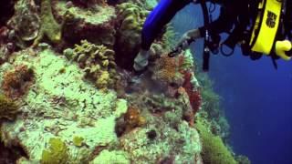 Bonaire Dive Trip 2013