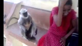 marwadi video2