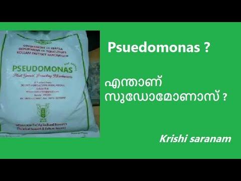 Aquaponics Meaning In Malayalam Aquaponic