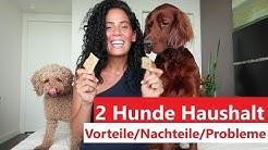 2 Hunde Haushalt // Vorteile, Nachteile, Probleme