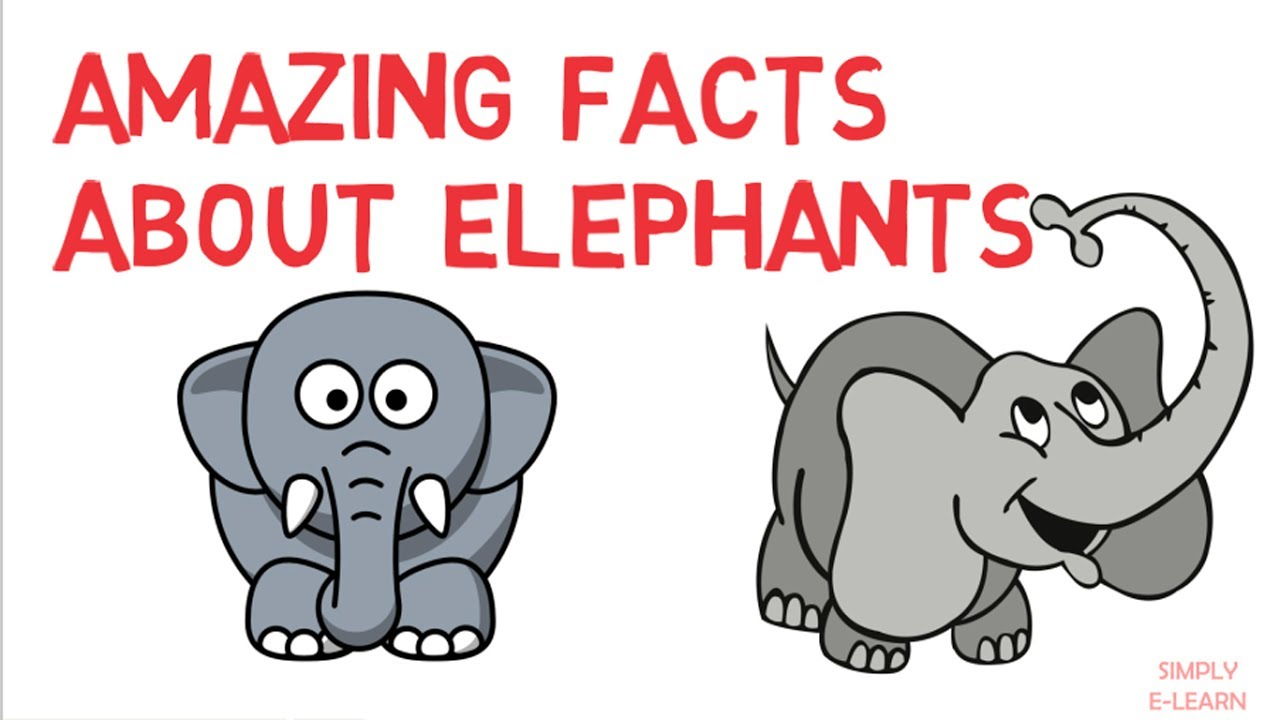 Amazing facts about elephants - trivia - animal kingdom for kids ...