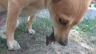 Кошка Принесла Собаке Мышь
