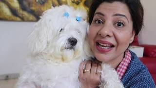 When your Dog is Smarter than your Plan | Cherry's day out | Ep 1 | Ss vlogs :-)
