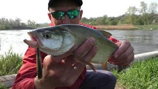 ЭТОТ МОНСТР РАЗОГНУЛ КРЮЧОК!!! Секреты Ловли ЖЕРЕХА с Берега  Рыбалка на Спиннинг
