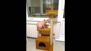обзор когтеточек домиков и комплексов для кошек