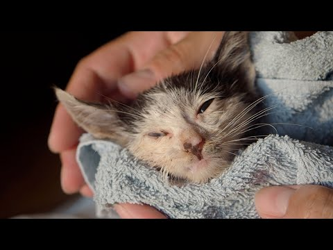 Kitten Suffers On The Street, Waiting For A Miracle