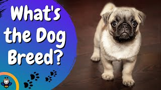 30 Dog Breed (Can you guess it?) | Animal Quiz